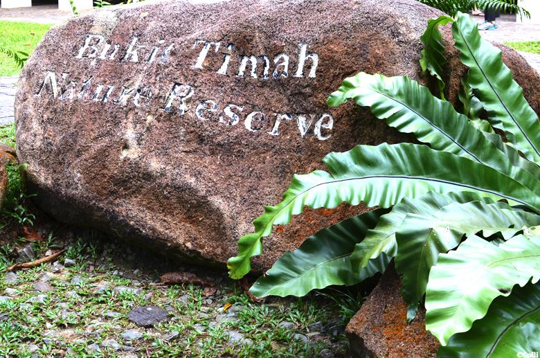 Bukit Timah nature reservoir