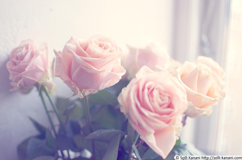 pale pink roses blog about paris fashion food travel. Black Bedroom Furniture Sets. Home Design Ideas