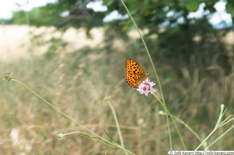 butterfly-provence-3