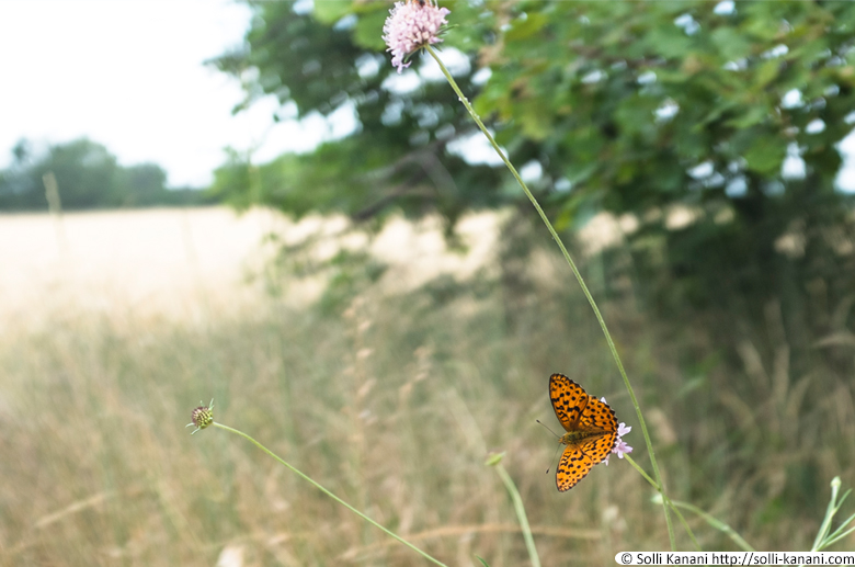butterfly-provence