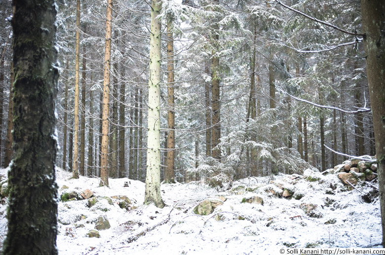 forest-snow