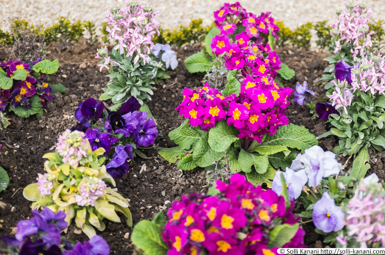 jardin-luxembourg-printemps