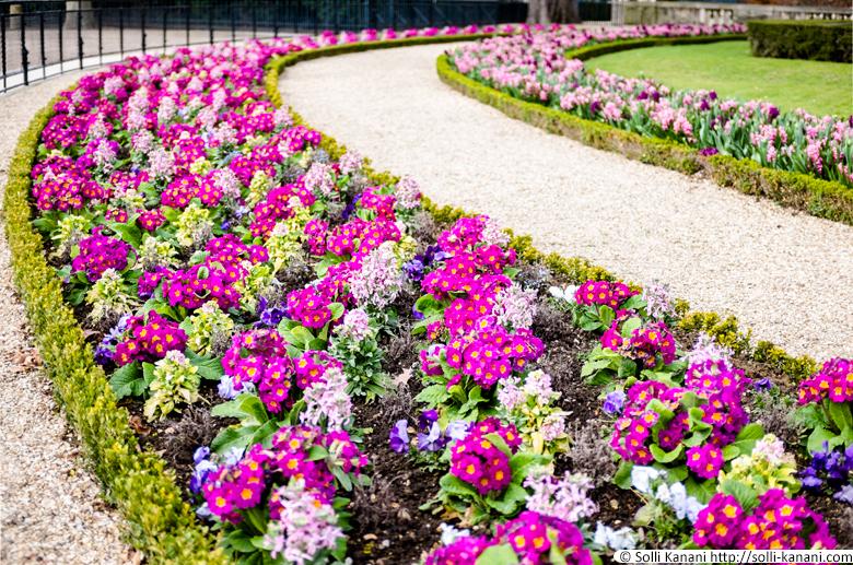 printemps-jardin-luxembourg-02
