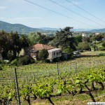 Petra di Mela - AOC vineyard in Corsica