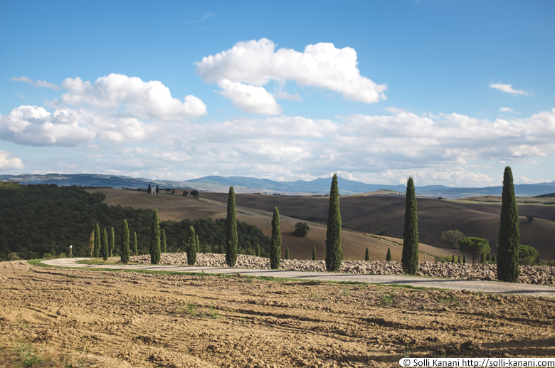 Tuscany Cypress Alley