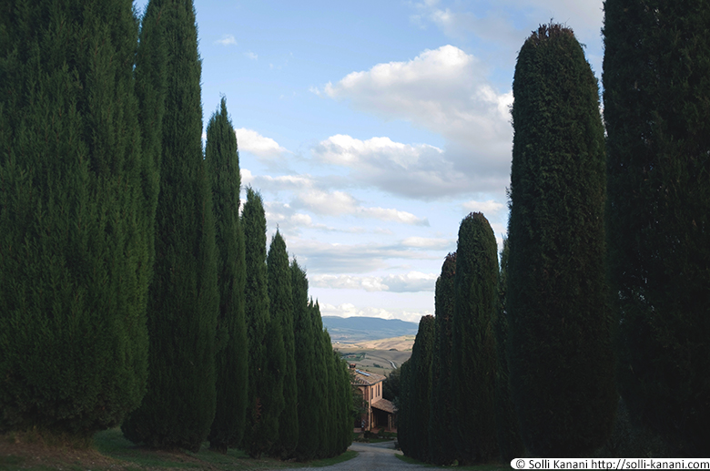 tuscany-cypress