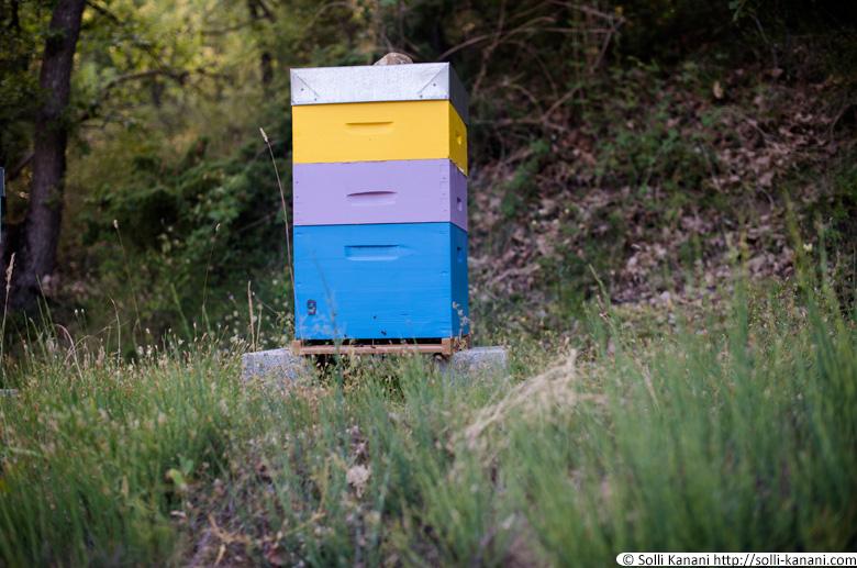 Bee honey Provence