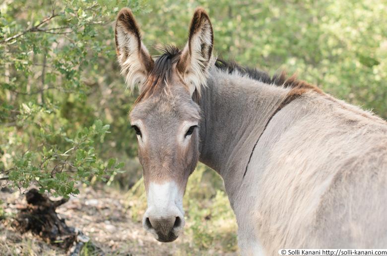 Donkey Provence