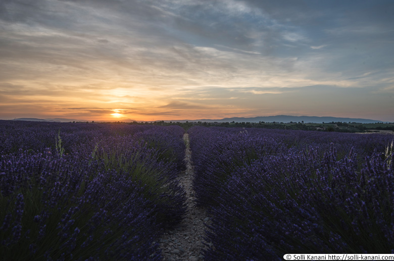 Sunset lavender Valensole