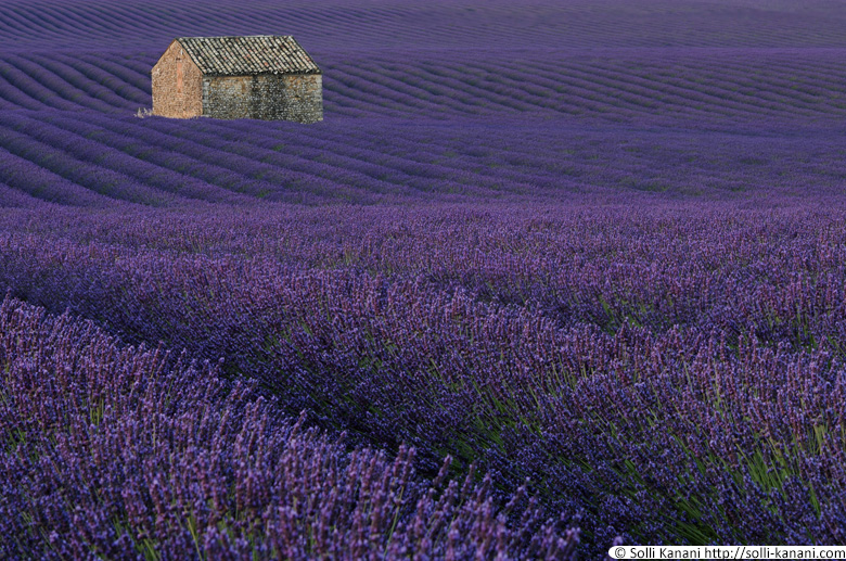 house lavender field