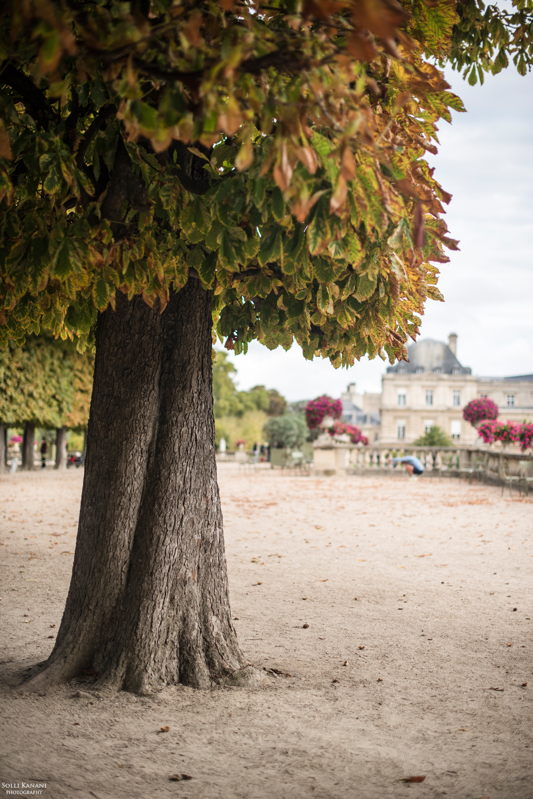 Fall is coming to Paris -  Jardin du Luxembourg