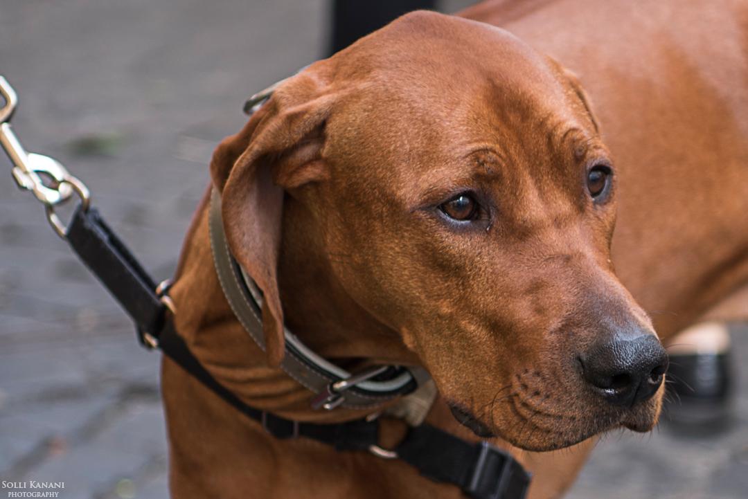 Dog on the market of Campo de' Fiori